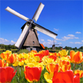 Marketresearch in the Netherlands